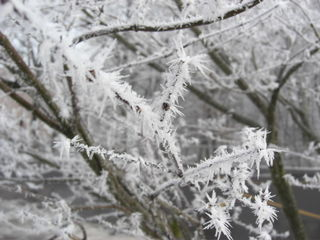 IceCrystalsBranches